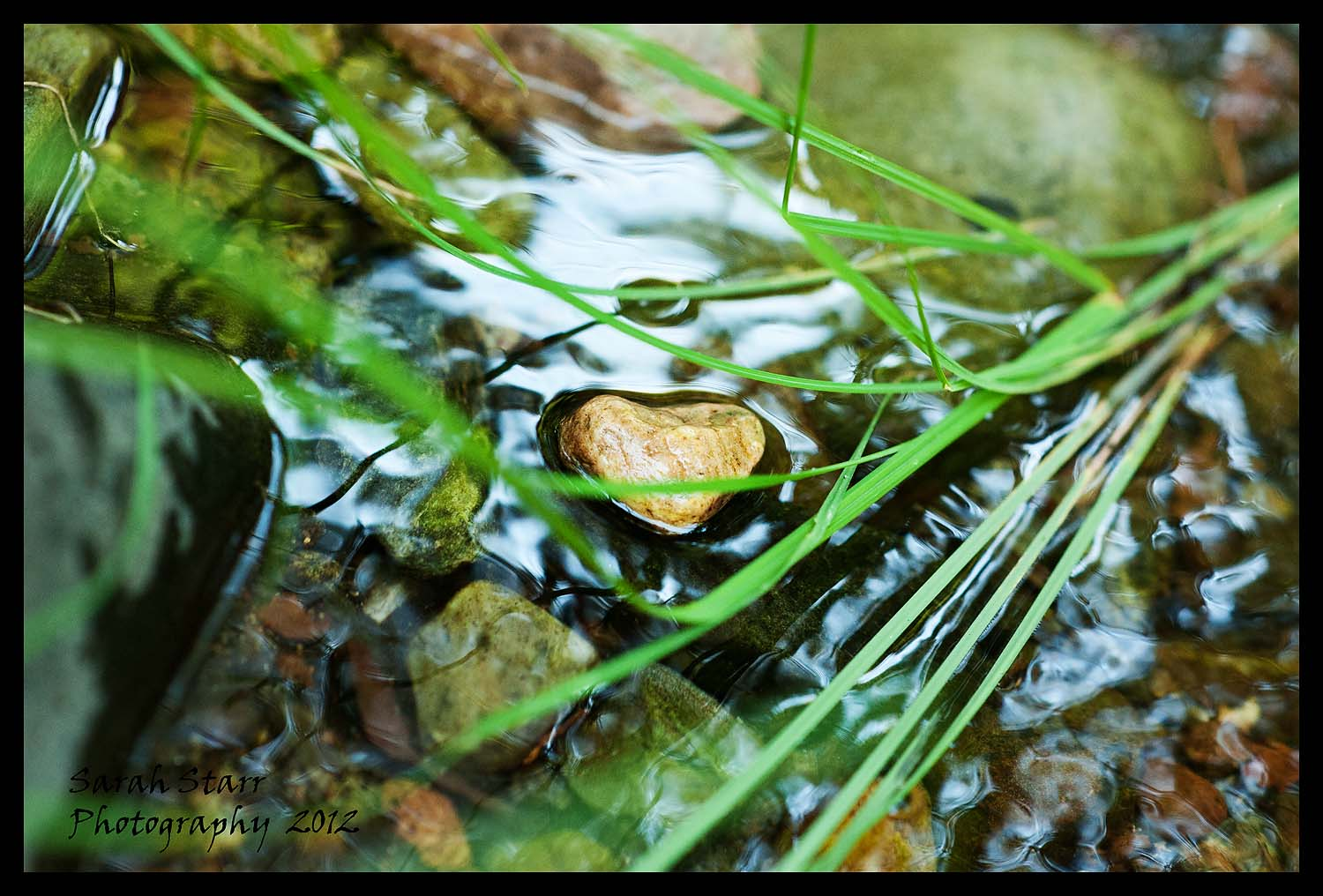 Heart in the river and grass